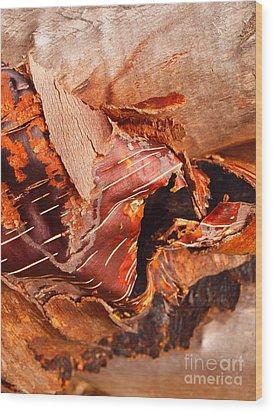 Curled Bark Wood Print by Tara Turner