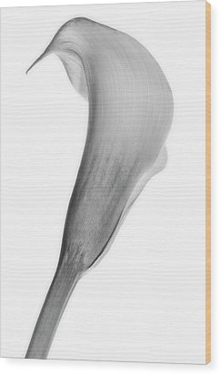 Wood Print featuring the photograph Curves Ahead by Mike Lang