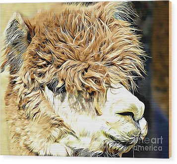 Soft And Shaggy Wood Print by Kathy M Krause