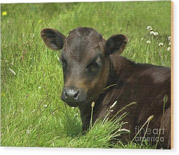 Cute Cow Wood Print