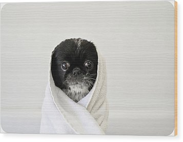 Cute Dog Wrapped Wood Print by Emma Mayfield Photography
