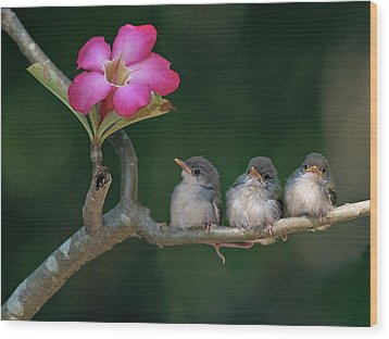 Cute Small Birds Wood Print by Photowork by Sijanto
