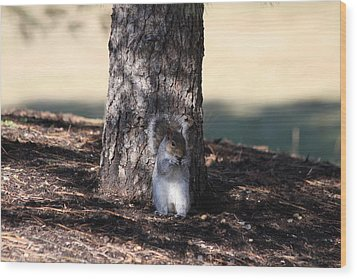 Wood Print featuring the photograph Cute Squirrel by Vadim Levin