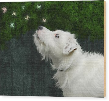 Cute White Jack Russel Dog Wood Print