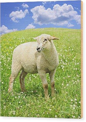 Cute Young Sheep Wood Print by Elena Elisseeva