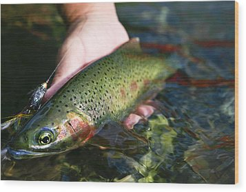 Cutthroat Trout On The Middle Fork Wood Print by Drew Rush