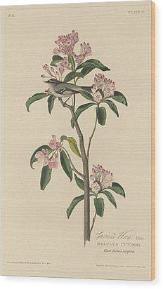 Cuvier's Wren Wood Print by Rob Dreyer