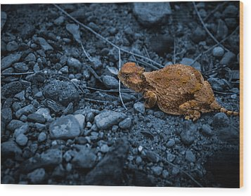 Cyanotype Horned Toad Wood Print