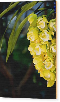 Cymbidium Wood Print