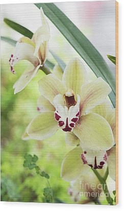 Wood Print featuring the photograph  Cymbidium Orchid by Tim Gainey