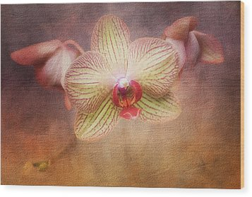 Cymbidium Orchid Wood Print by Tom Mc Nemar