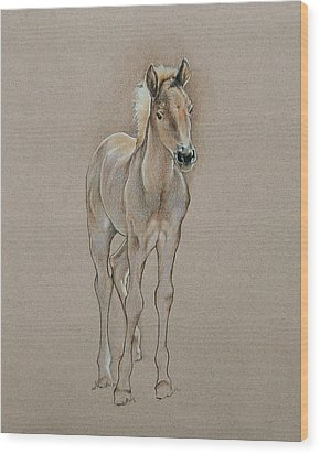 Cyndee's Foal Wood Print by Cindy Davis