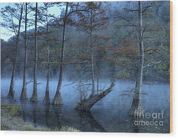 Wood Print featuring the photograph Cypress Awakening by Tamyra Ayles