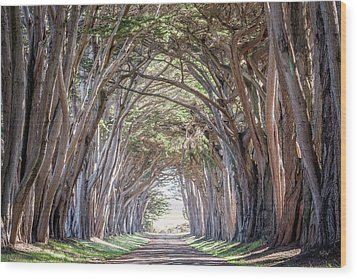 Wood Print featuring the photograph Cypress Embrace by Everet Regal
