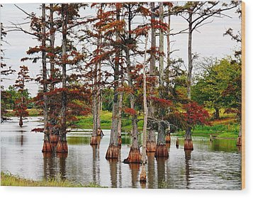 Wood Print featuring the photograph Cypress In Autumn by KayeCee Spain