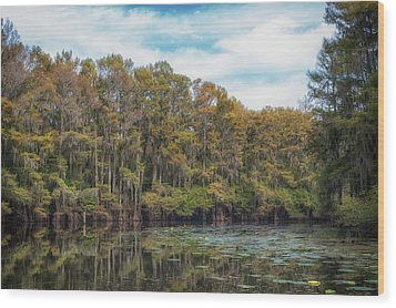 Cypress Jungle Wood Print