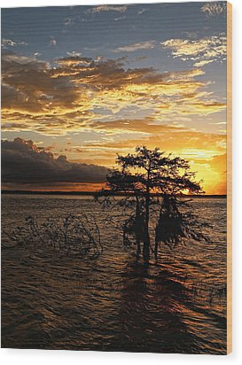Cypress Sunset Wood Print by Judy Vincent