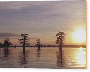 Cypress Sunset Wood Print by Sheila Ping