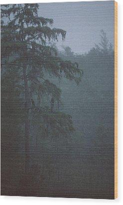 Cypress Swamp Wood Print by Kimberly Mohlenhoff