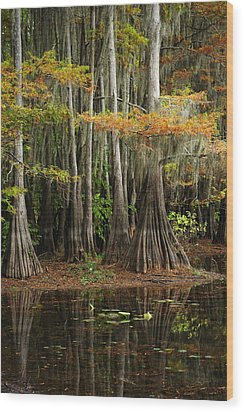 Cypress Trees Forest Wood Print by Iris Greenwell