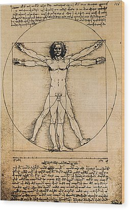Da Vinci Rule Of Proportions Wood Print by Science Source