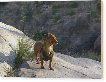 Dachshund's Delight Wood Print