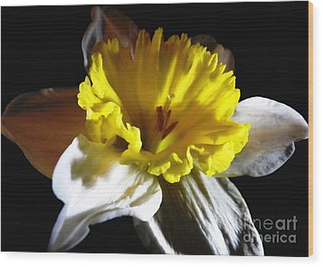 Wood Print featuring the photograph Daffodil 2 by Rose Santuci-Sofranko