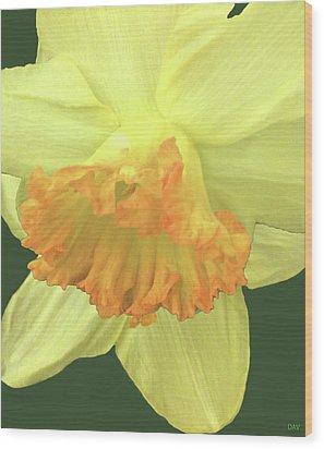 Daffodil Down Wood Print by Debra     Vatalaro