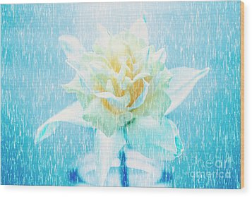 Wood Print featuring the photograph Daffodil Flower In Rain. Digital Art by Jorgo Photography - Wall Art Gallery