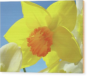 Daffodil Flowers Artwork 18 Spring Daffodils Art Prints Floral Artwork Wood Print by Baslee Troutman