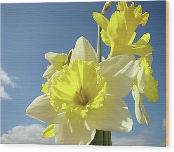 Daffodil Flowers Artwork Floral Photography Spring Flower Art Prints Wood Print by Baslee Troutman