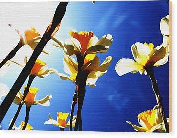Daffodil Wood Print by Nathan Grisham