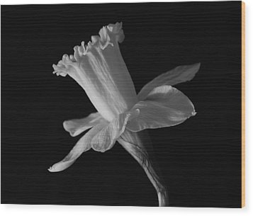 Daffodil Wood Print by Terence Davis