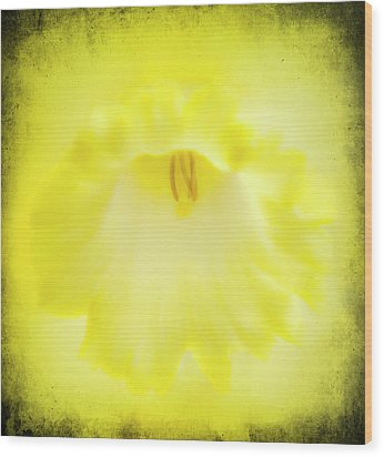Daffodils Are Yellow Wood Print by Meirion Matthias