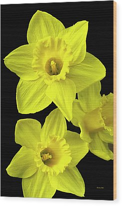 Wood Print featuring the photograph Daffodils by Christina Rollo