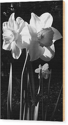 Daffodils In Sunlight Wood Print
