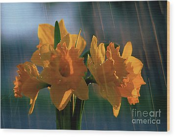 Daffodils In The Rain Wood Print by Terril Heilman