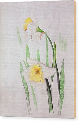 Daffodils Wood Print by J R Seymour