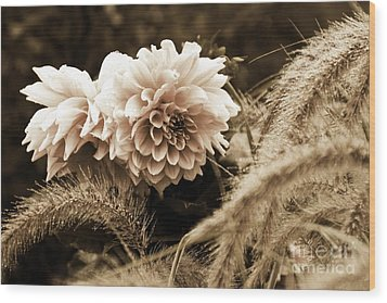 Dahlia After A Shower Wood Print by Marcia Lee Jones