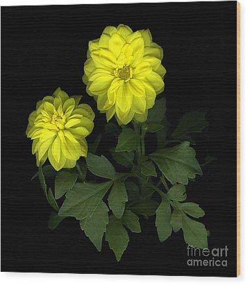 Dahlia Wood Print by Christian Slanec