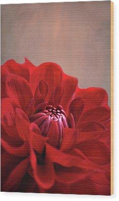 Dahlia Dalliance  Wood Print by Marion Cullen