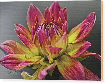 Wood Print featuring the photograph Dahlia Flame by Joann Copeland-Paul