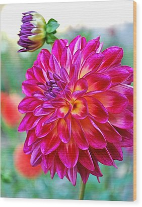 Dahlia Fuchsia Surprise  Wood Print