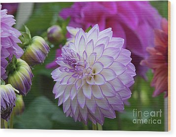 Dahlia Wood Print by Glenn Franco Simmons
