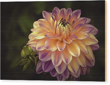 Wood Print featuring the photograph Dahlia In Peach And Lavender by Julie Palencia