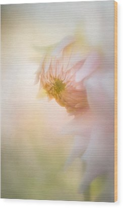 Dahlia In The Soft Morning Mist Wood Print