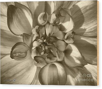Dahlia Named Who Dun It Wood Print by J McCombie