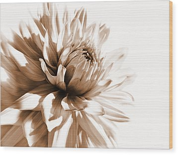 Dahlia Sepial Flower Wood Print by Jennie Marie Schell