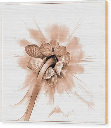 Wood Print featuring the photograph Dahlia Shyness by Julie Palencia
