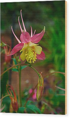 Dainty Flower Wood Print by Amber Lea Starfire